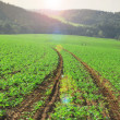 Agriculture field — Stock Photo #7201431