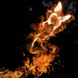 Fire butterfly - Foto Stock
