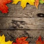 Autumn background — Stock Photo #7208092