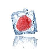Malina zamrzlé v ledu kostky — Stock fotografie