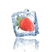 Jahoda zamrzlé v ledu kostky — Stock fotografie