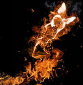 Fire butterfly — Stock Photo