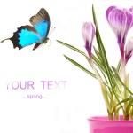 Spring theme — Stock Photo #7223950