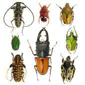Coleção de besouros — Foto Stock