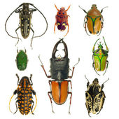Beetles collection — Stock Photo