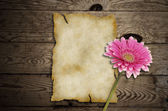 Old paper with gerber flower on wooden background — Stock Photo