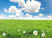 Fresh spring background — Stock Photo