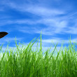 Green grass backgound — Stock Photo