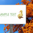 Stock Photo: Big billboard with autumn background