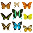 Exotic butterfly collection — Stock Photo