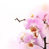 Bela flor de orquídea — Foto Stock