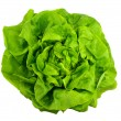Lettuce — Stock Photo #7698875