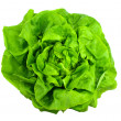 Lettuce — Stock Photo #7699436