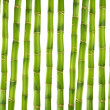 Zen bamboo — Stock Photo