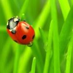 Beautiful ladybug on green — Stock Photo