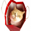 Christmas cat in red bag — Stock Photo #7794790