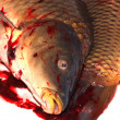 Death carp — Stock Photo