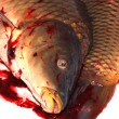 Stock Photo: Death carp