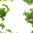 Salad background — Stock Photo #7796971