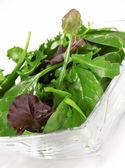 Fresh Salad leaves over white — Stock Photo
