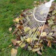 Stock Photo: Raking fallen autumn leaves