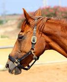 Horse1 — Stock Photo