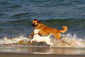 Dogs in the sea — Stock Photo