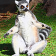 Lemur3 — Stock Photo #7619507