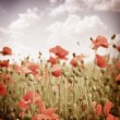 Stylized old slide. The field of poppies in the sky. - Stock Photo
