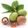 Green walnut; peeled walnut and its kernels. - Photo