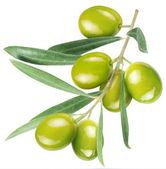Aceitunas en la rama con hojas — Foto de Stock