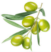 Olives on branch with leaves — Stock Photo