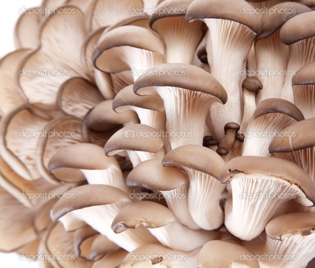 Oyster mushrooms — Stock Photo #6870627
