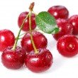 Cherries. Isolated on a white — Stock Photo