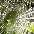 Spider on the web. - 图库照片