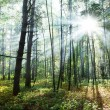 Sunny forest. — Stock Photo #7535376