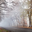 Foto Stock: Forest road in a foggy autumn day.