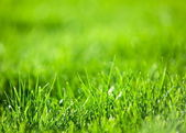 Green luscious grass. — Stock Photo