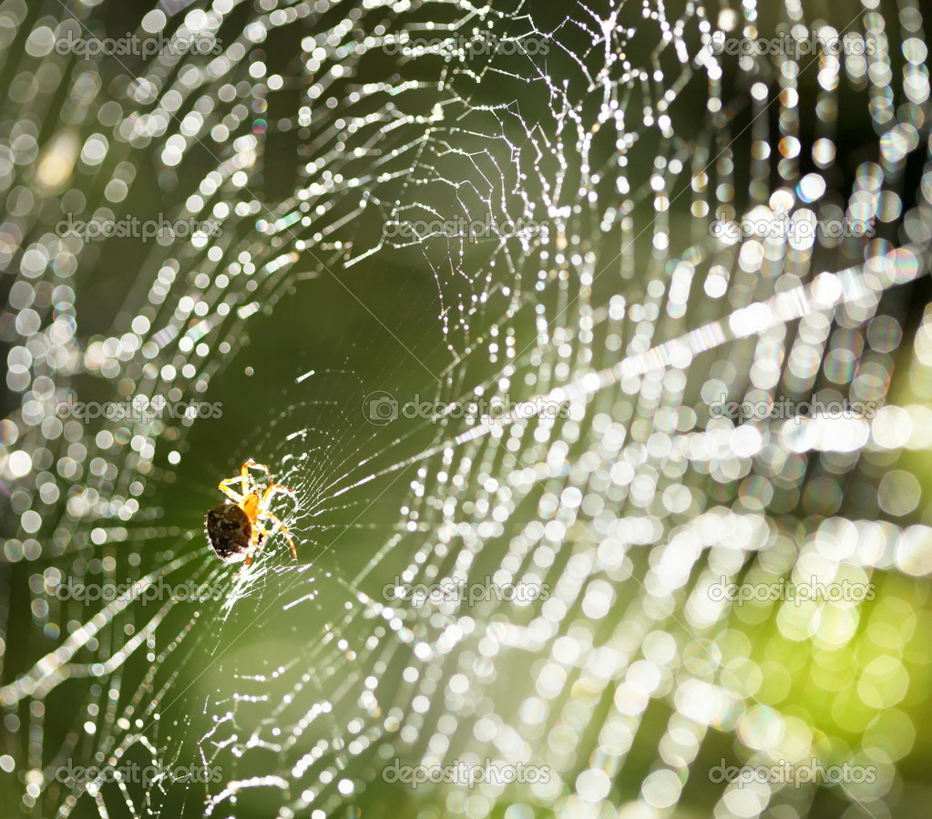 Spider on the web. — Stock Photo #7535338