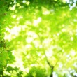 Sun's rays shining through the lush greens. - Stock Photo