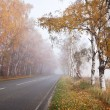 图库照片: Forest road in a foggy autumn day.