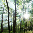 Sunny forest. - Stock Photo