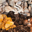 Stock Photo: Various mushrooms