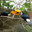 Stock Photo: Toucans life