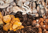 Various mushrooms — Stock Photo