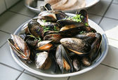 Dutch mussels — Stock Photo