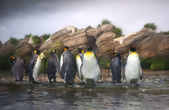 Penguin family — Stockfoto