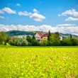 Stock Photo: Summer in country side