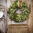 Stock Photo: Seasonal plant decoration