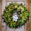 Seasonal plant decoration - Stock Photo